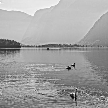 I took this photo when me and family were in Hallstatt Austria, in the year 2016. I was walking along the lake taking photographs. This was one of the photos I took that day.