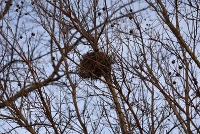 Little Nest