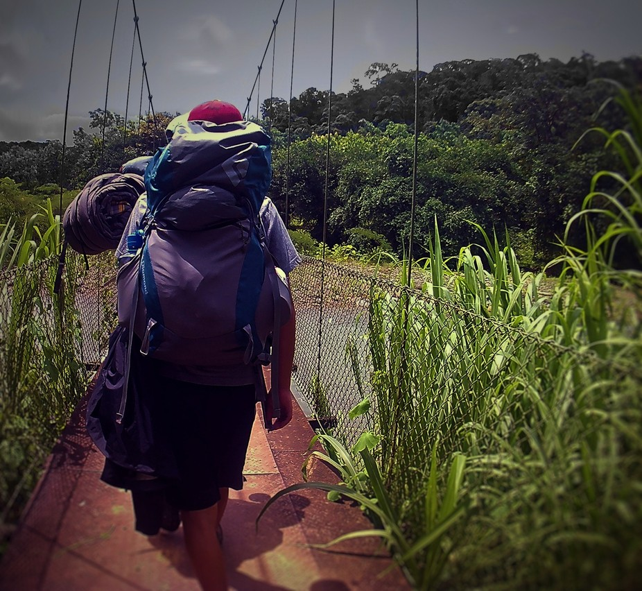Journey Into The Jungle