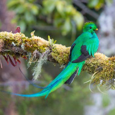 Quetzal -0010