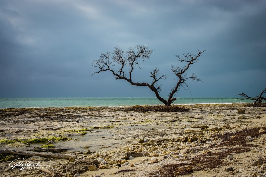 A lonely tree at Bahia Honda Key on a cloudy day