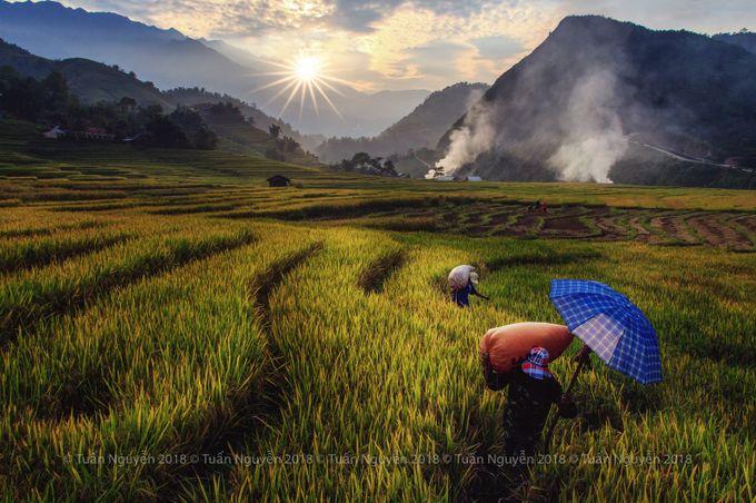 Mùa vàng by tunnguyn - Covers Photo Contest Vol 45
