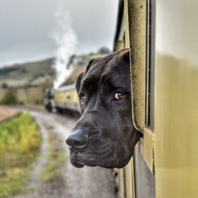 Poppy is enjoying the view while taking a ride on a steam train.