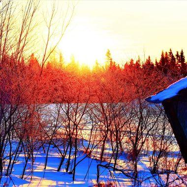 Sunrise off frosty brush behind birdhouse Nikon D3400 supervivid