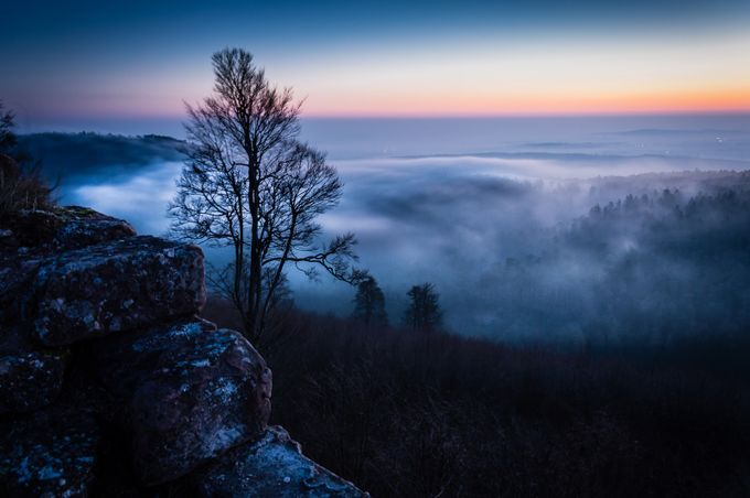 Misty morning by patrickterschlusen - Tree Silhouettes Photo Contest