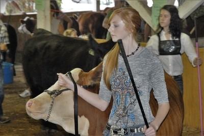 Showing Calves