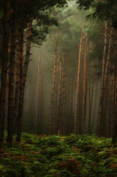 forest Geissfels