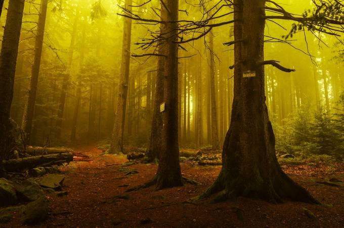 Taenchel mood by patrickterschlusen - Tall Trees Photo Contest