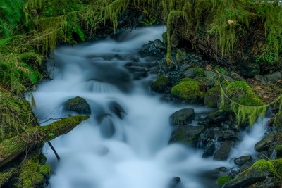 Olympic National Park Rain Forest 1879