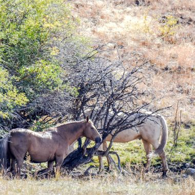 These horses were happy to hang around the waterhole last summer in the dry spell