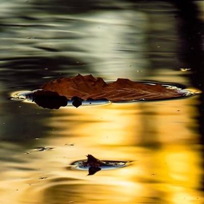 Early morning wander, leaf floated past as the sunrise lit up the beaver flow.  #trailsend #sunrise #reflection #floatingleaf #firstlight #wander #wetlands #woods #outthebackdoor #backyardnature #canon_photos #canonwhatelse #got_greatshots #marvelouz_worl