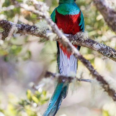 Quetzal-0347