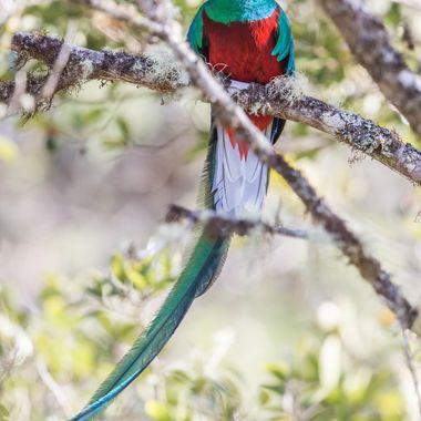Quetzal-0351