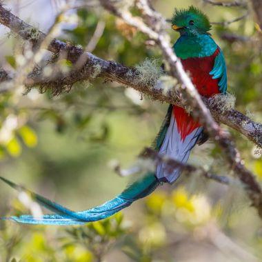 Quetzal-0424