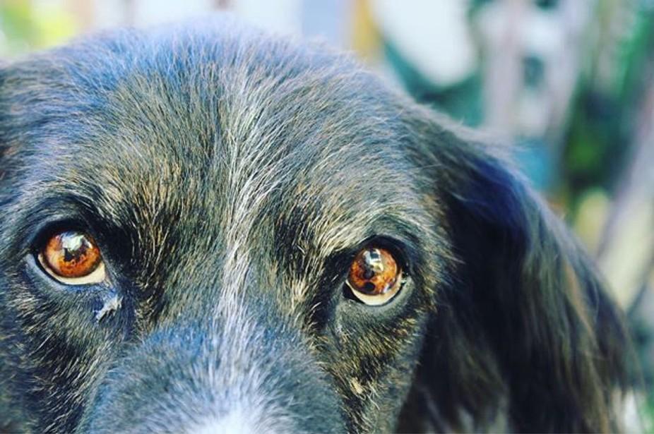 @dogsofinstagram @dogs_unity