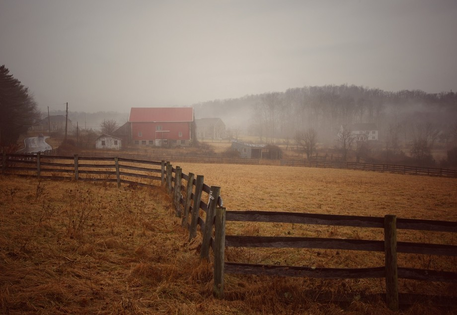 Fog in the country