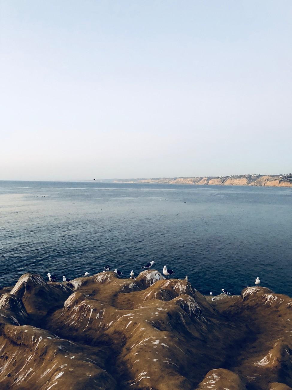 LJ Cove
