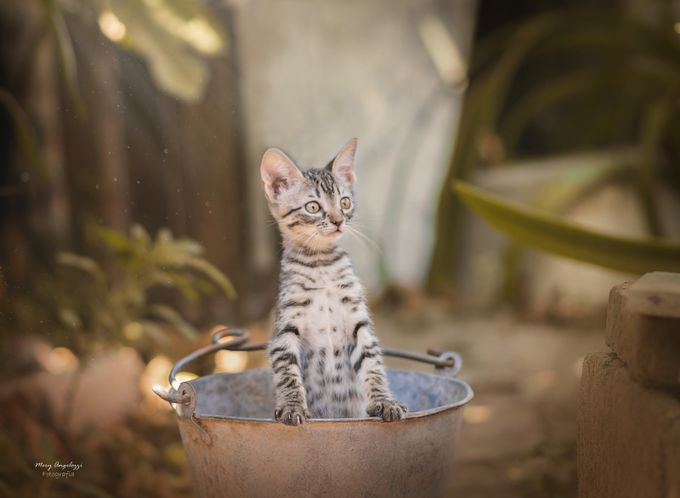 Sweet Cat. by meryangelozzi - Kittens vs Puppies Photo Contest
