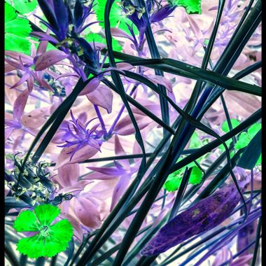 Abstract stems and Flowers