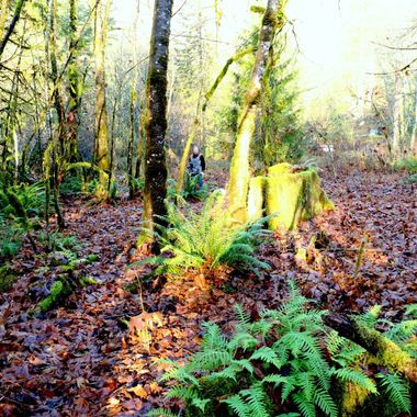 The forest floor is covered with beautiful ferns around Harrison River