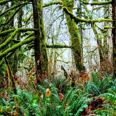 Trees and ferns do very well around Harrison River