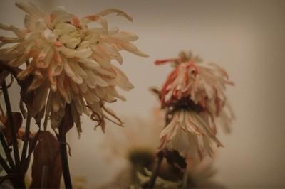 My dear dying flowers.
