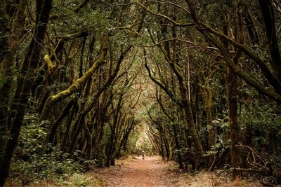 treeframing...