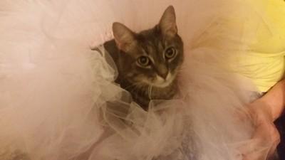 Alley Cat's Feminine Side