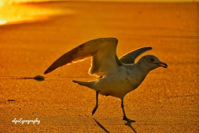 Seabird, Beach and Sunset !