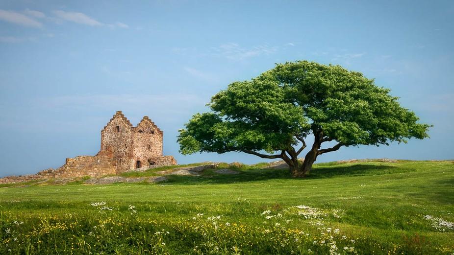 Hammershus Castle in summertime