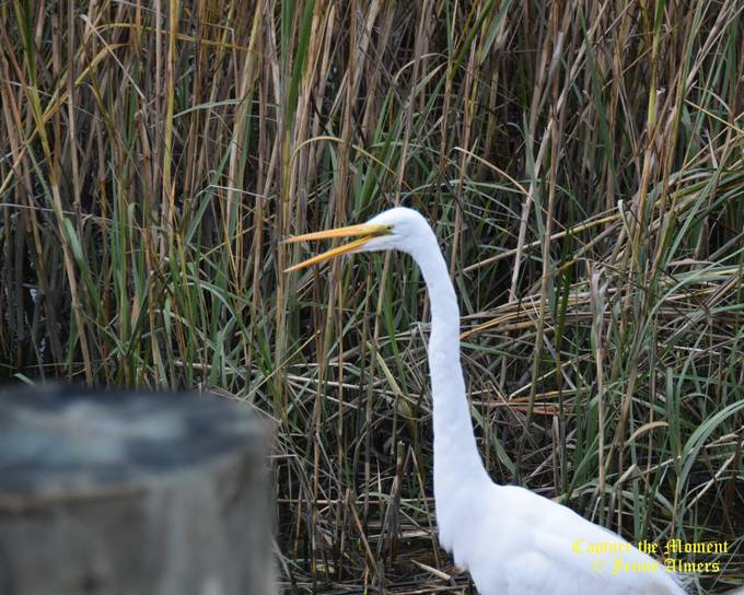 Egret Talks