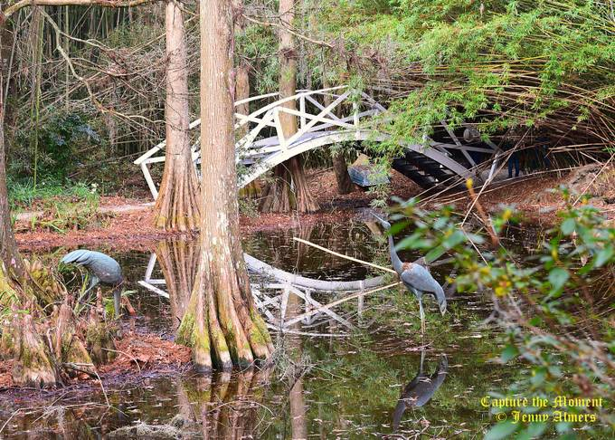 Bridge, Bamboo, Swamp, and Reflections