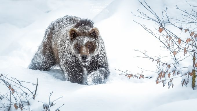 """Schneewanderung"" by uwegibkes - Winter Wildlife Photo Contest"