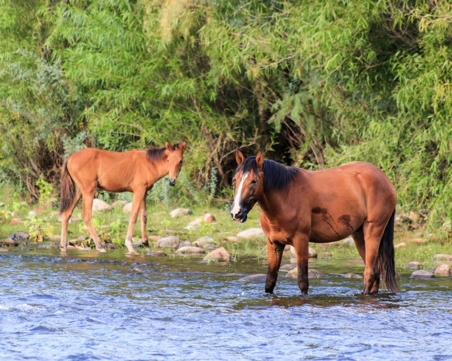 Every so often you can capture greatness. These wild horses happened to be eating the eel grass at the river, while I was there.