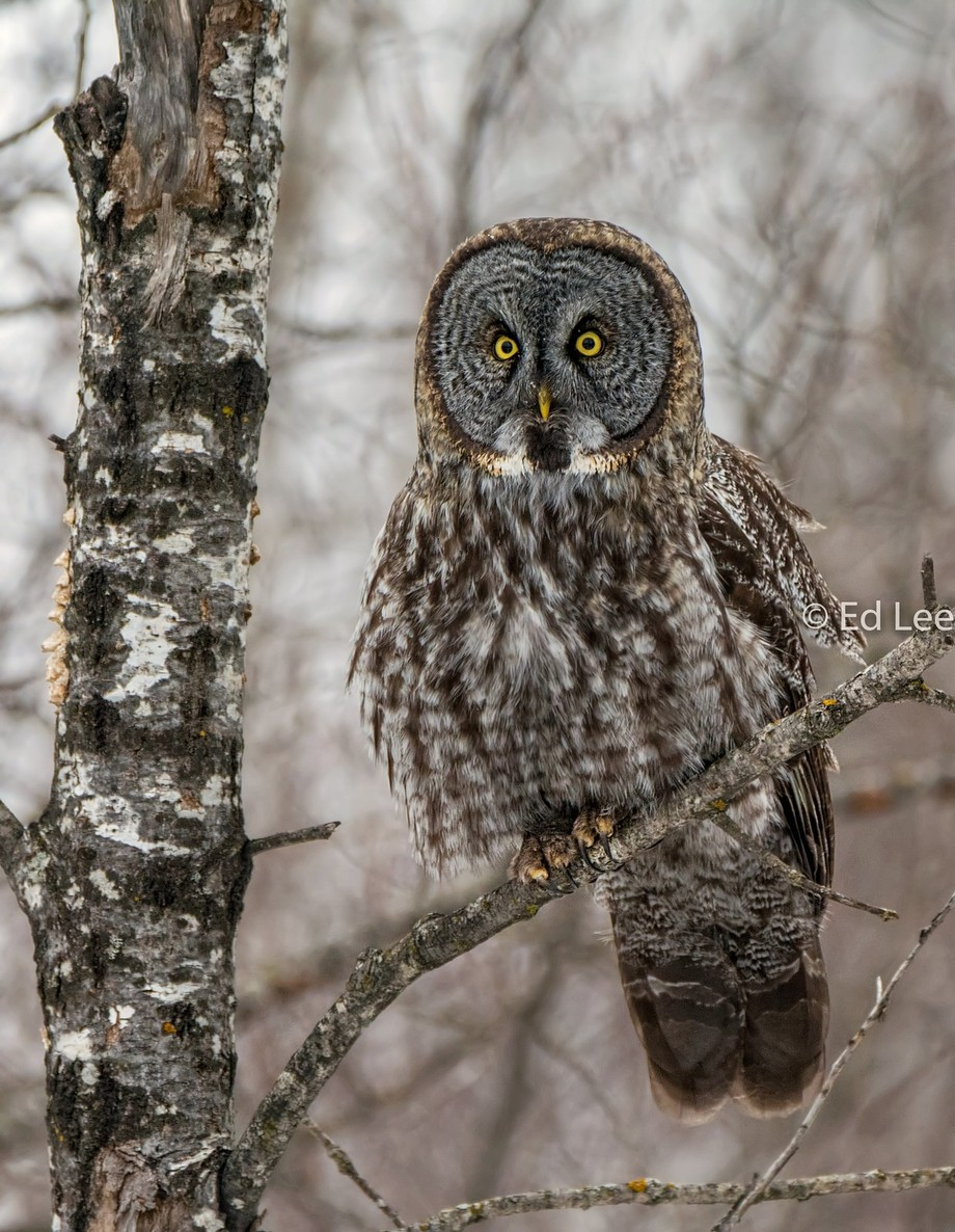 Satisfied by Eddieuuu071 - Beautiful Owls Photo Contest