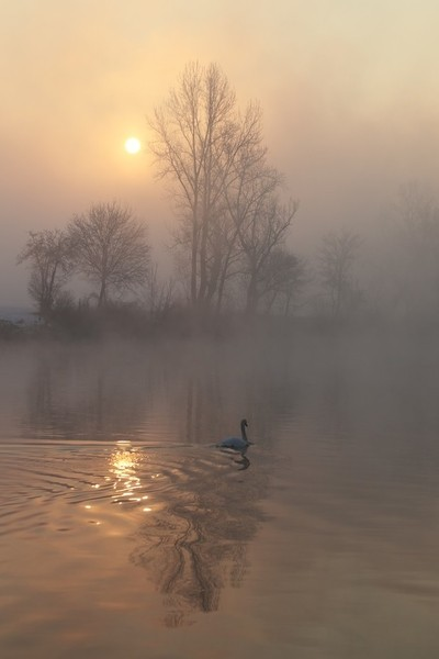 Swim in the foggy morning