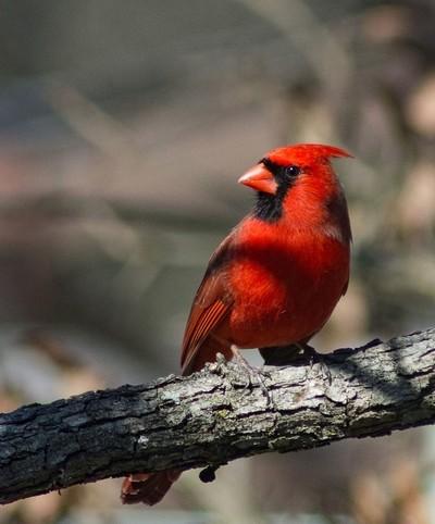 cardinal jan18