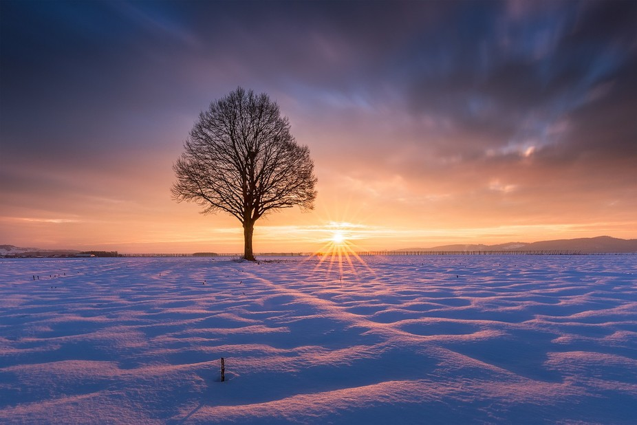 Lonely tree huged by golden light and freezeng snow.
