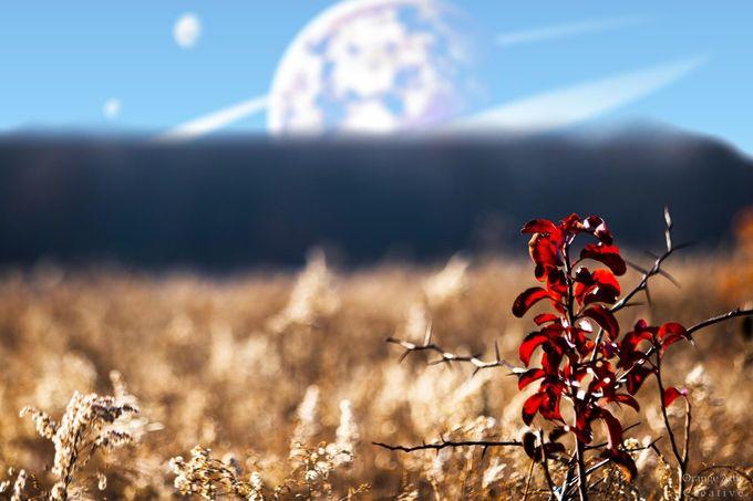 Distant but Familiar by OrangeAtticCreative - Fantasy In Color Photo Contest