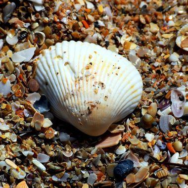 Seashells on Seashore at NSB