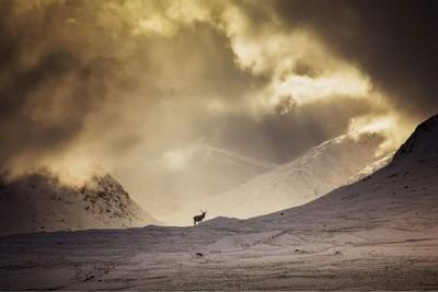 Rannoch Moor. A wild Stag posing perfectly
