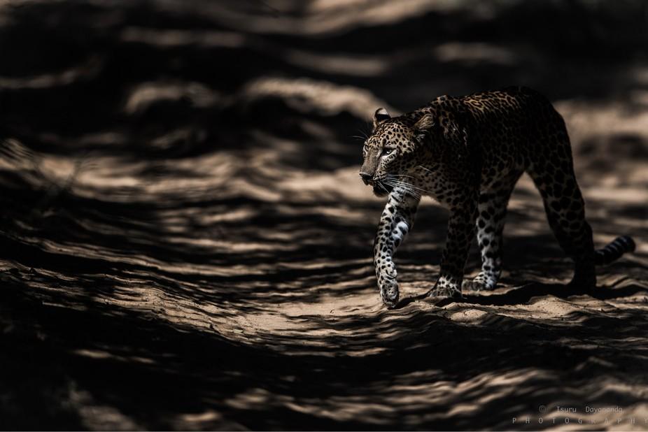 The Shadows.
