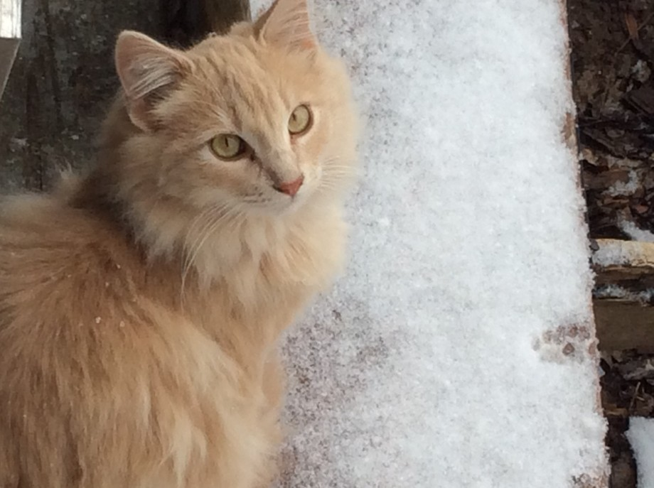 A yellow tabby kitten has its first glimpse of true winter time and his first encounter of his pa...