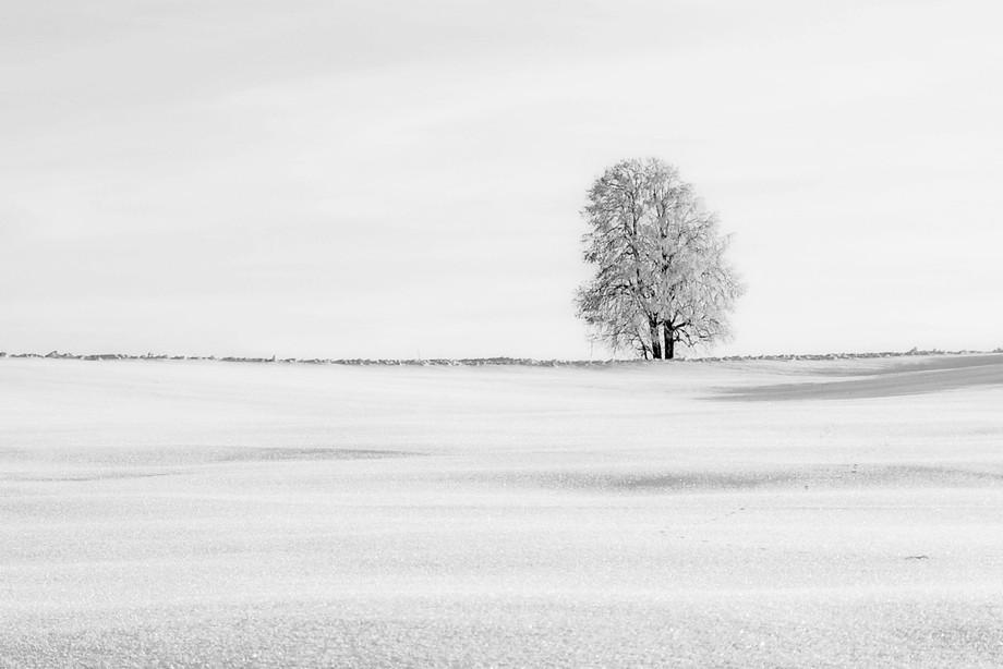 Tree of ice