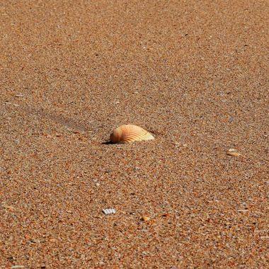 Single Shell