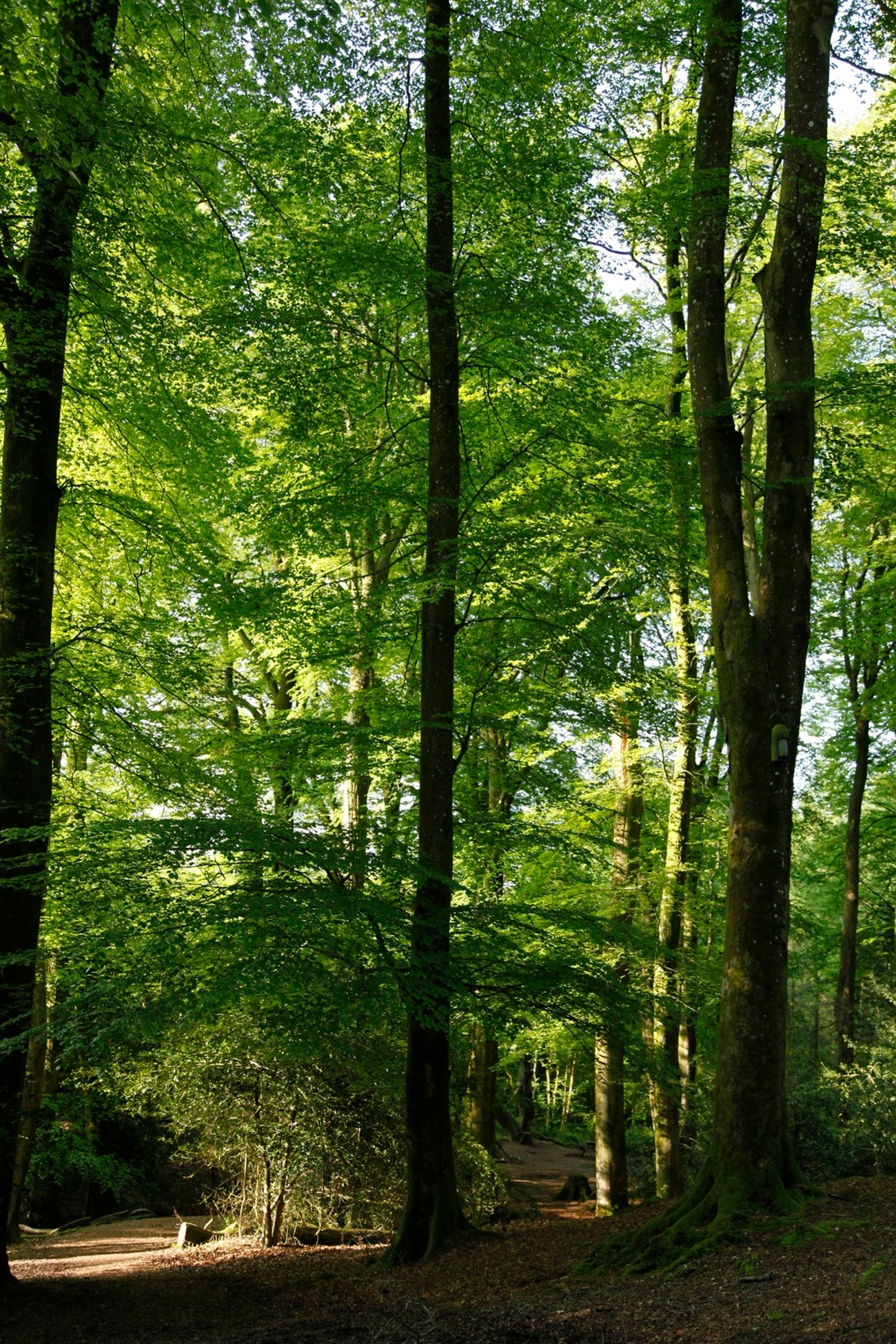 A beautiful woodland walk just outside the town of Dorchester. It was always a peaceful walk and very good excercise as it was not all on one level!