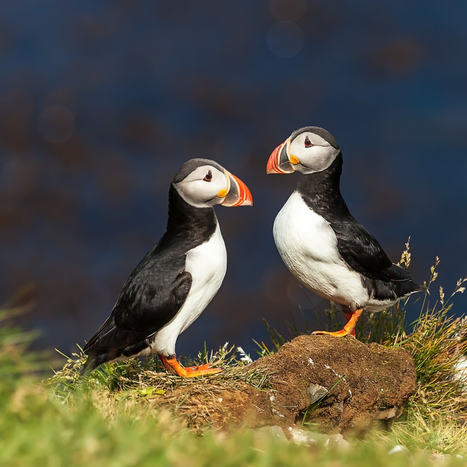 **** by AlexS - Celebrating Nature Photo Contest Vol 4