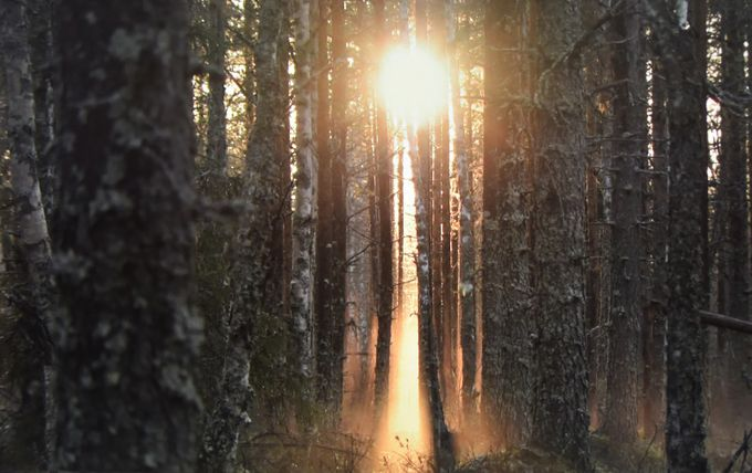 dawn by Dayan - Tall Trees Photo Contest