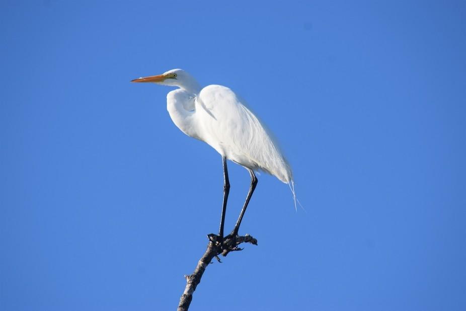 Heron on high branch