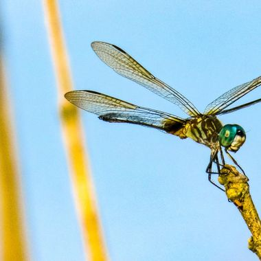07-15 DRAGONFLY-2-2